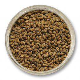 Пшеничен Малц, основен малц от Viking Malt - пивоварство, Направи си бира