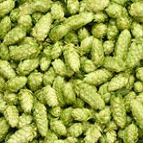 Хмел Шишарки, суровини за домашния пивовар - Направи си бира